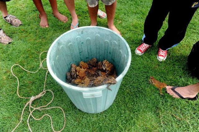 Australian Frog Roundup (16 pics)