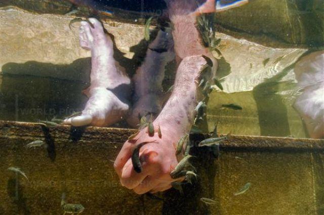 Fish Spa in Turkey (12 pics)