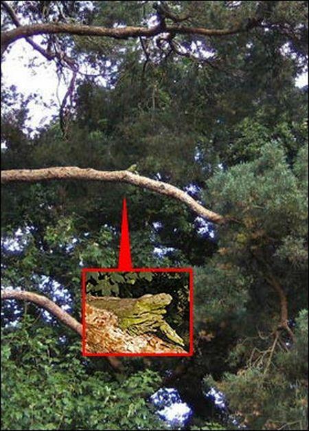 Hilarious Rescue of Iguana (3 pics)