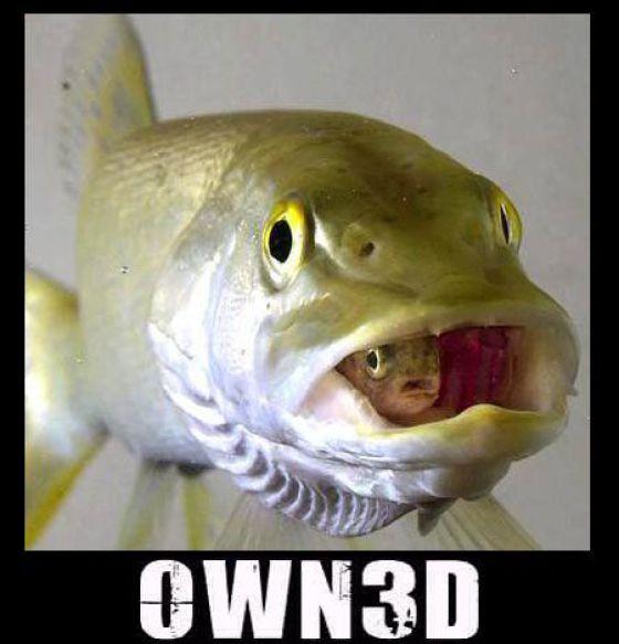 OWN3D (44 pics)