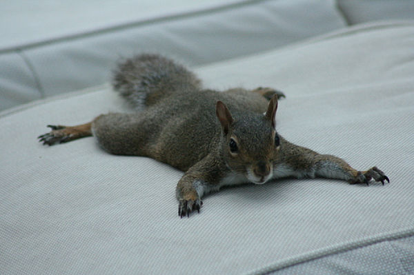 The Laziest Squirrels in the World (17 pics)