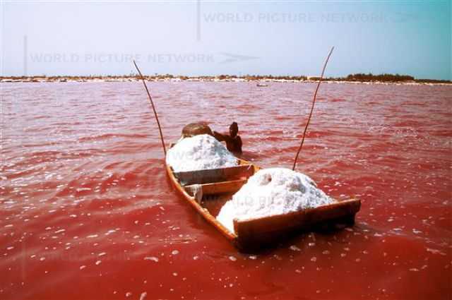 Pink Lake in Senegal (20 pics)