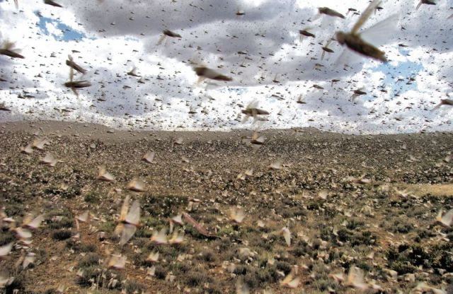 Swarms of Different Insects (27 pics)