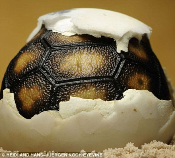 Hatching from the Egg (12 pics)