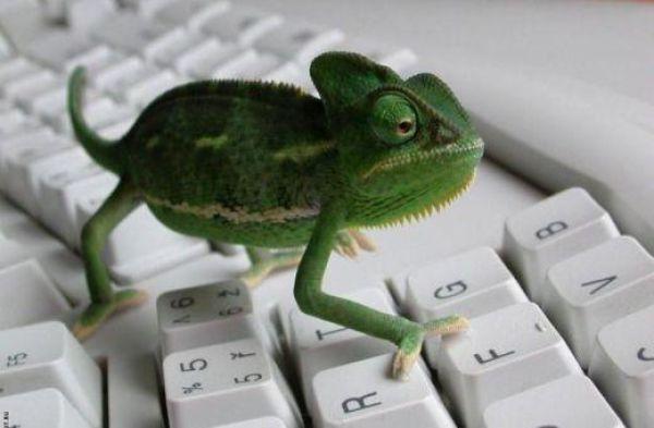 Funny Computer Geniuses (27 pics)