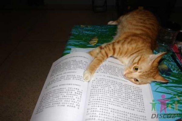 Cat That Likes to Read (14 pics)