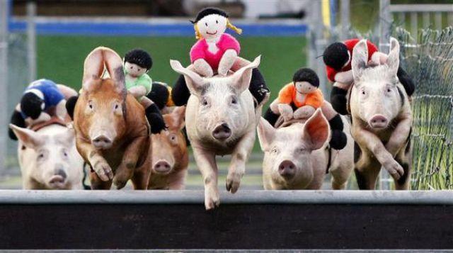 Unusual Races (17 pics)