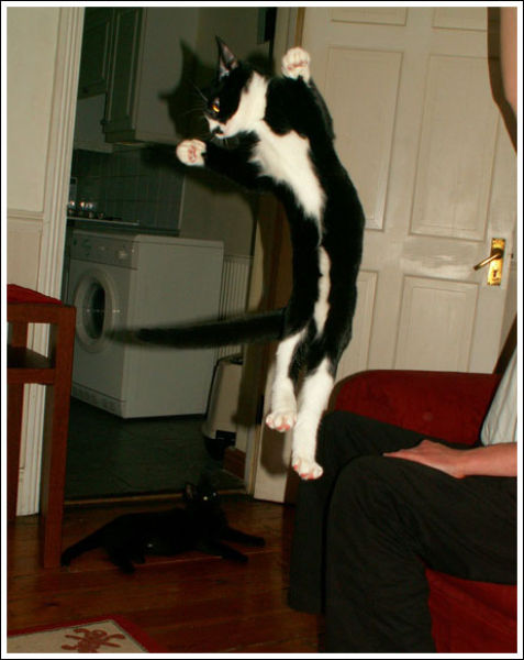 Cats that Can Fly (59 pics)