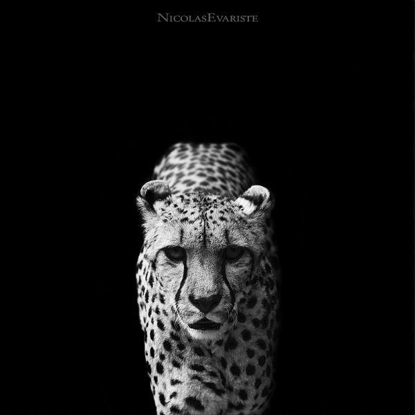 Fantastic Black and White Photos (123 pics)