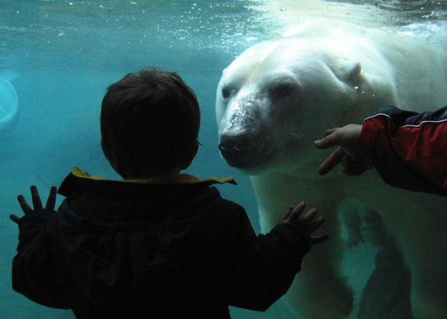 Great Shots of Zoo Animals (30 pics)