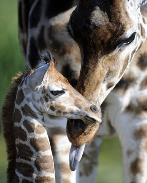 Sweet Baby Animals (40 pics)