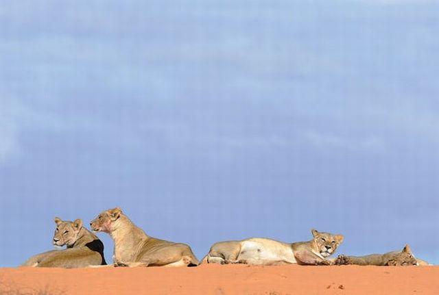 """The Colors of the Kalahari"" (19 pics)"