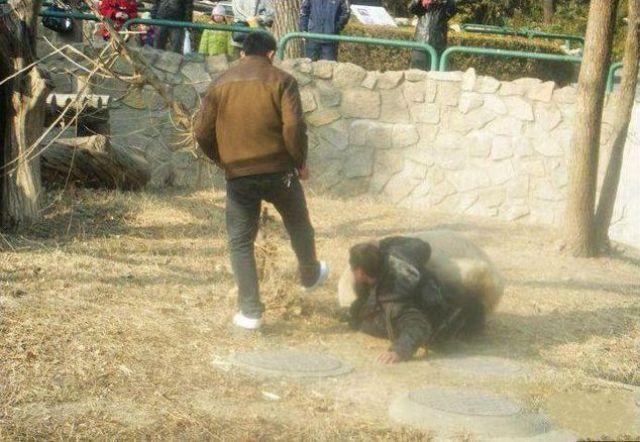 Animals Attack People (44 pics)