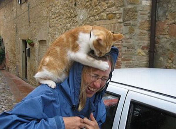 Animals Attack People (44 pics)