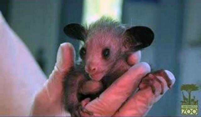 Ugly but Cute Baby Animals (55 pics) - Izismile.com