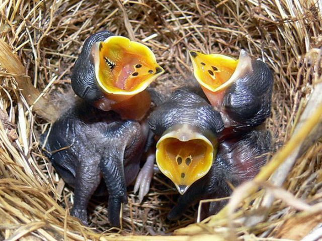 Ugly but Cute Baby Animals (55 pics)