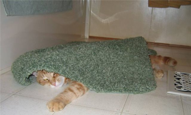 A Cat Who Knows How to Relax (14 pics)