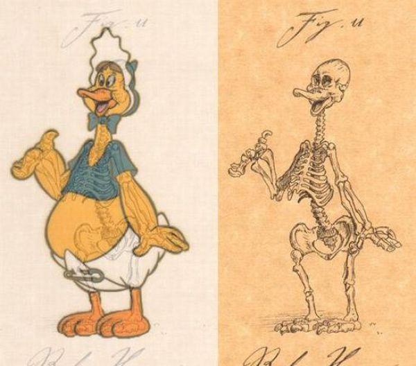 Funny Anatomy Of Cartoon Characters 21 Pics Izismile
