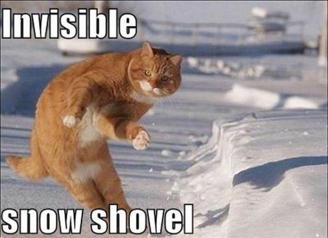Cats Startled by Something Invisible (25 pics)