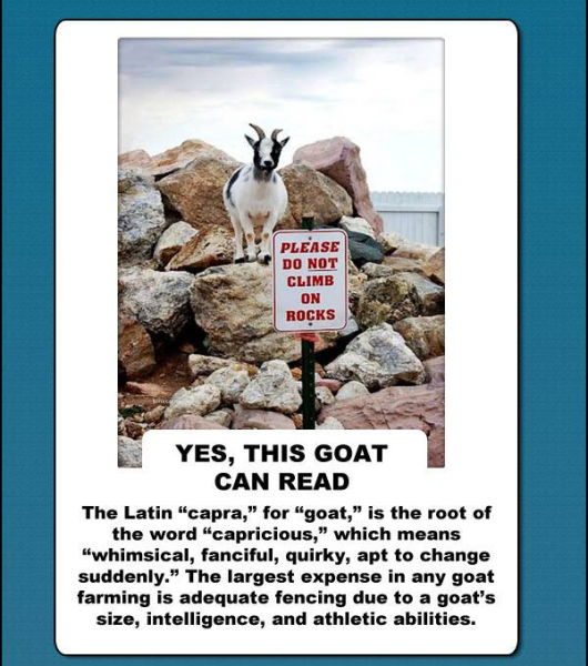 Will Goats Rule Our World? (10 pics)