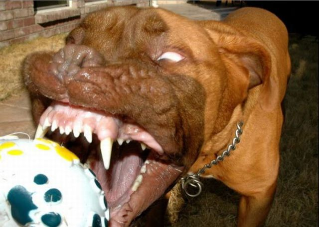 These Dogs Will Crack You Up! (76 pics)