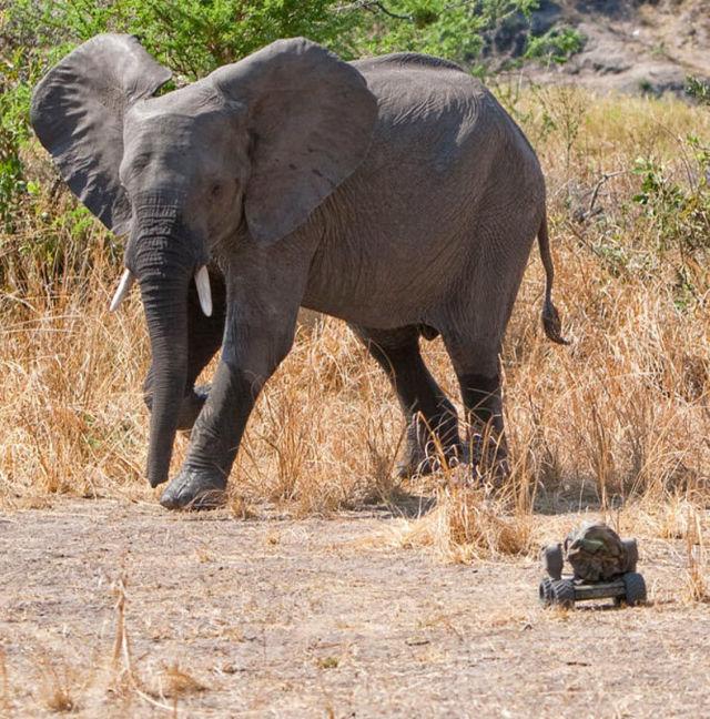 Wild Animals' Reaction to a Camera (14 pics)