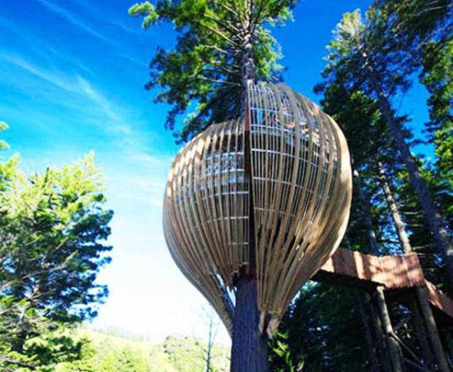 Amazing Crysalis Treehouse Restaurant (7 pics)