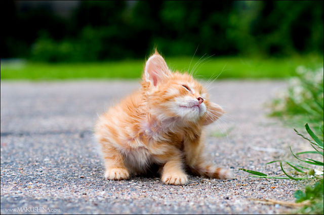 Another Touching Story of Another Little Kitty (19 pics)