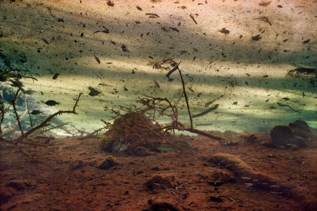 Dreamy Underwater World (8 pics)