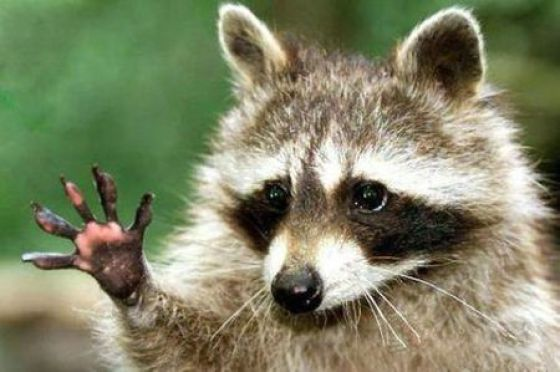 High Five! (31 pics)