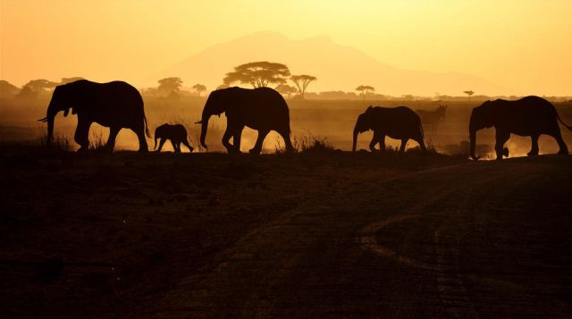 Incredible Africa Photos (26 pics)