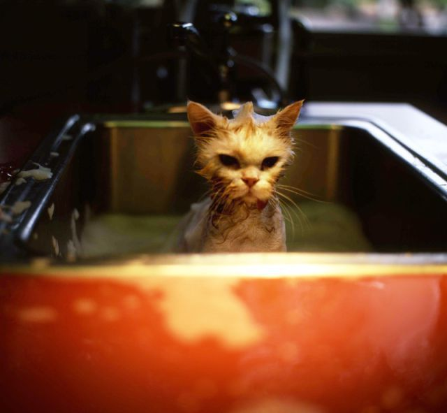 These funny animals (33 pics)