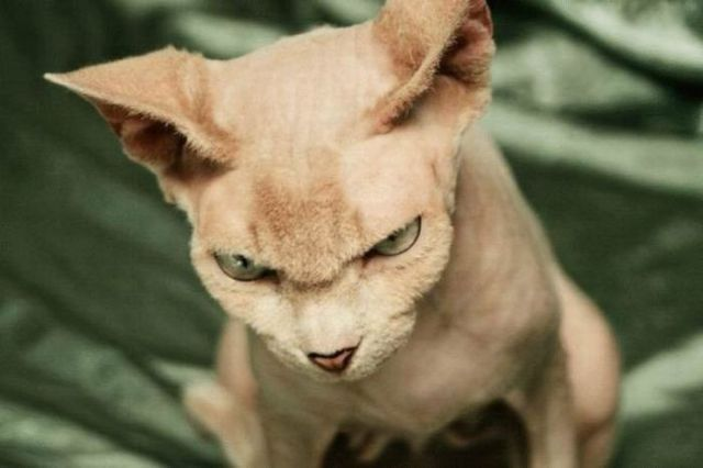 Freaking Awesome Animal Emotions (60 pics)