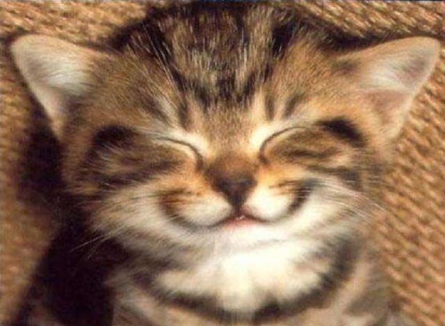 Freaking Awesome Animal Emotions (60 pics) - Izismile.com