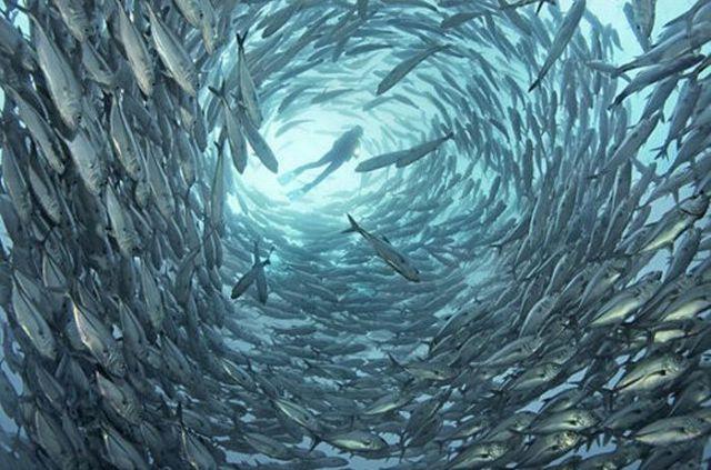 Gorgeous Underwater World (50 pics)