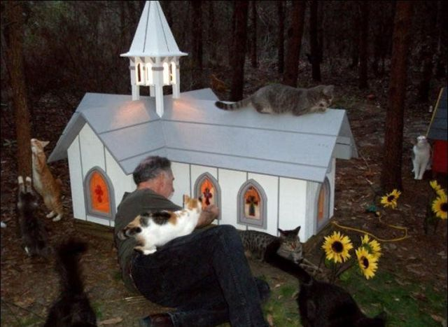 The Promise Land for Cats (42 pics)
