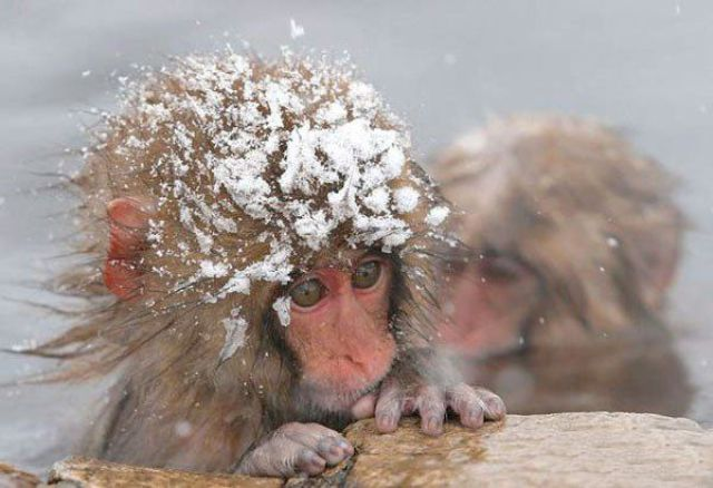 These funny animals (36 pics)