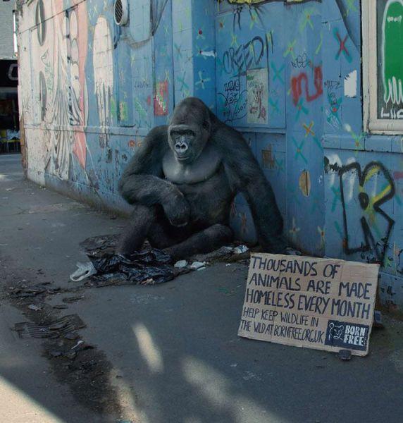 Creative Wildlife Ad (7 pics)