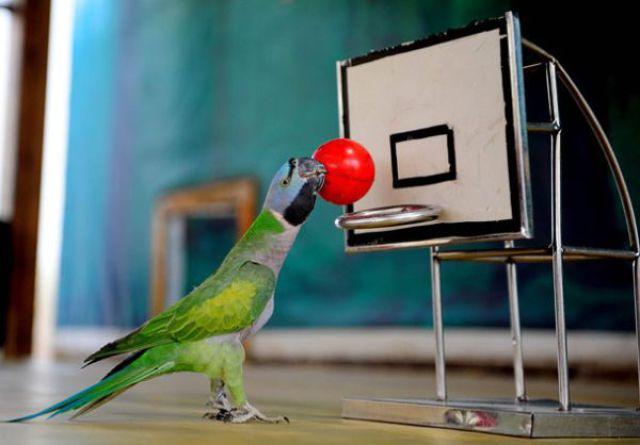 Athletic Birds (13 pics)