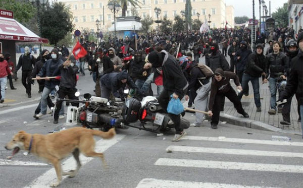 The Dog Who Loves Riots (17 pics)