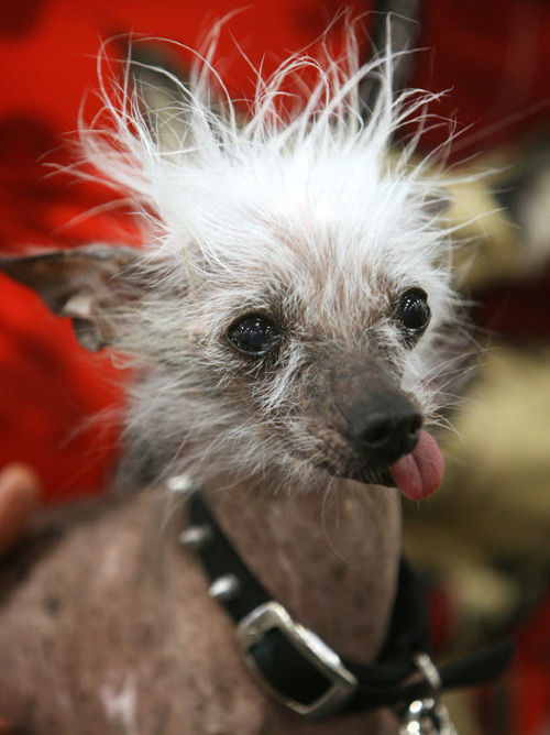 20 Ugliest Dogs Ever (20 pics)