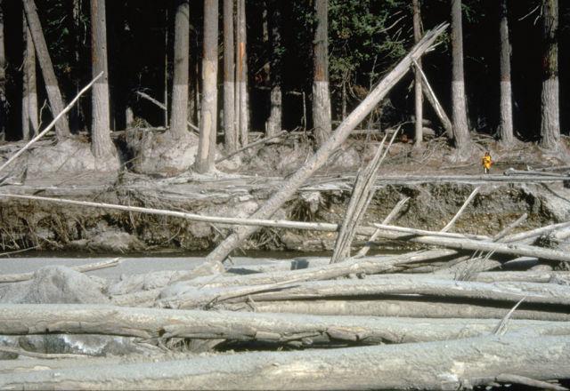 Earthquake in Washington State (37 pics)
