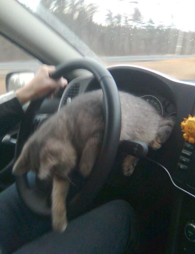Extreme Driving in a Russian Way (6 pics)
