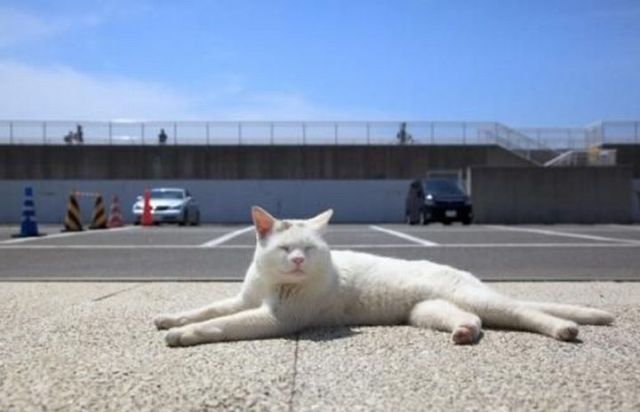 The Laziest Cat Ever (5 pics)