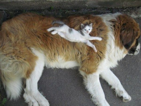 These funny animals (50 pics)