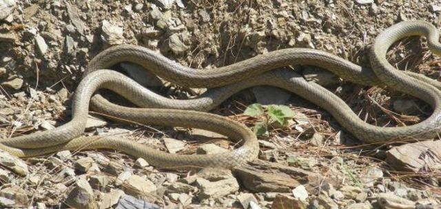 The Way Snakes Are Doing It (26 pics)