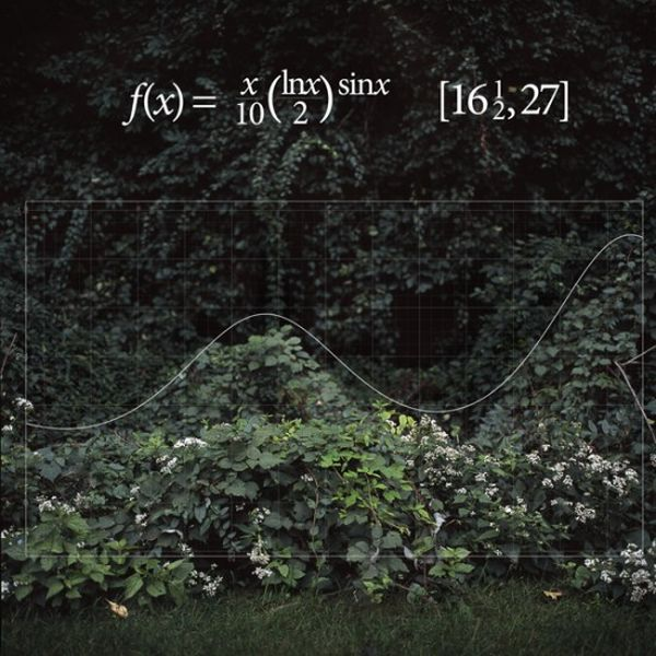 When Math and Nature Come Together (8 pics)