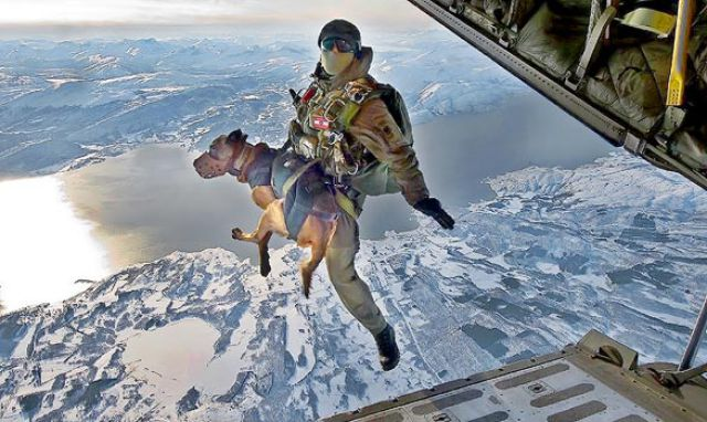 Dogs Do Parachutes Too (23 pics)