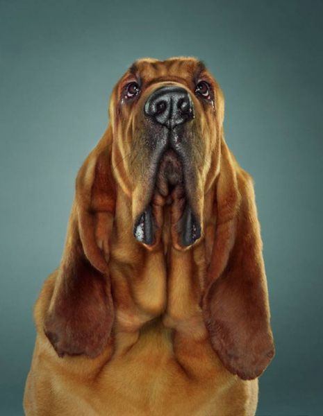 Dog Portraits (24 pics)
