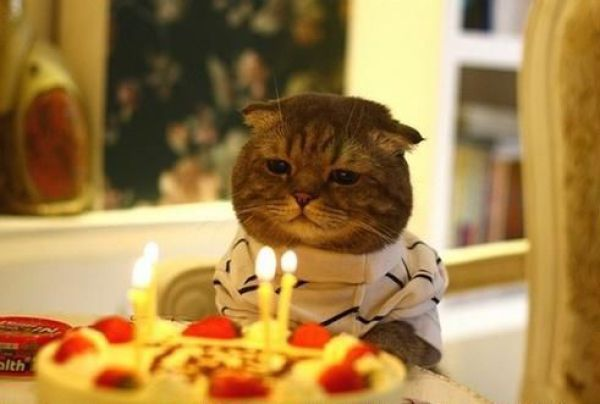 How Cats Celebrate Their Birthdays! (27 pics)